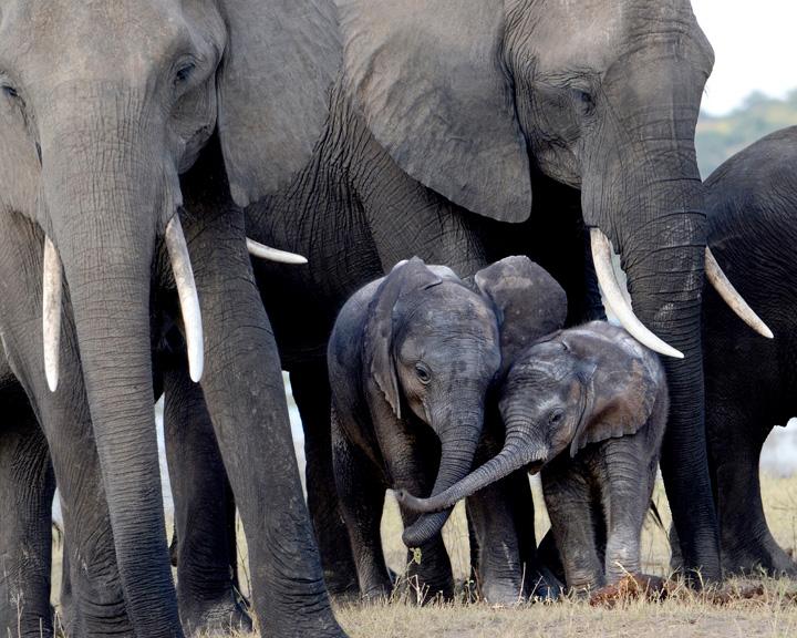 Elephant Playpen